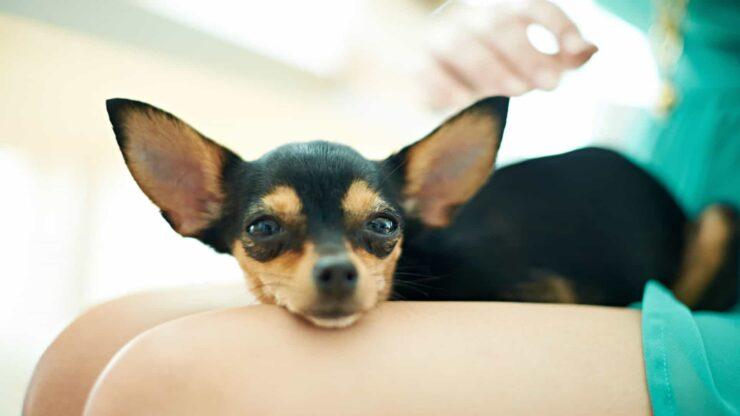 perros huelen partes íntimas