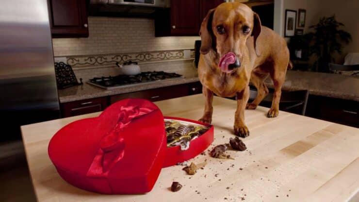 alimentos perro
