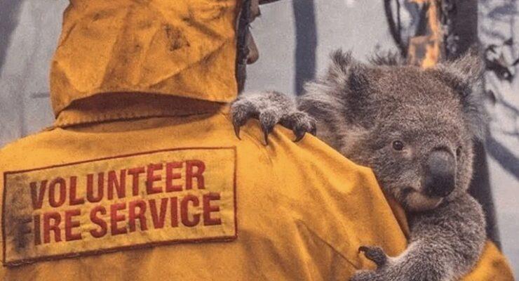 salvar a koalas